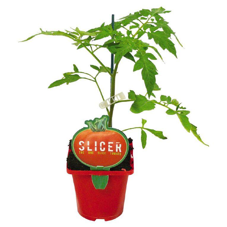 Slicer Tomato 10cm Pot, , hi-res