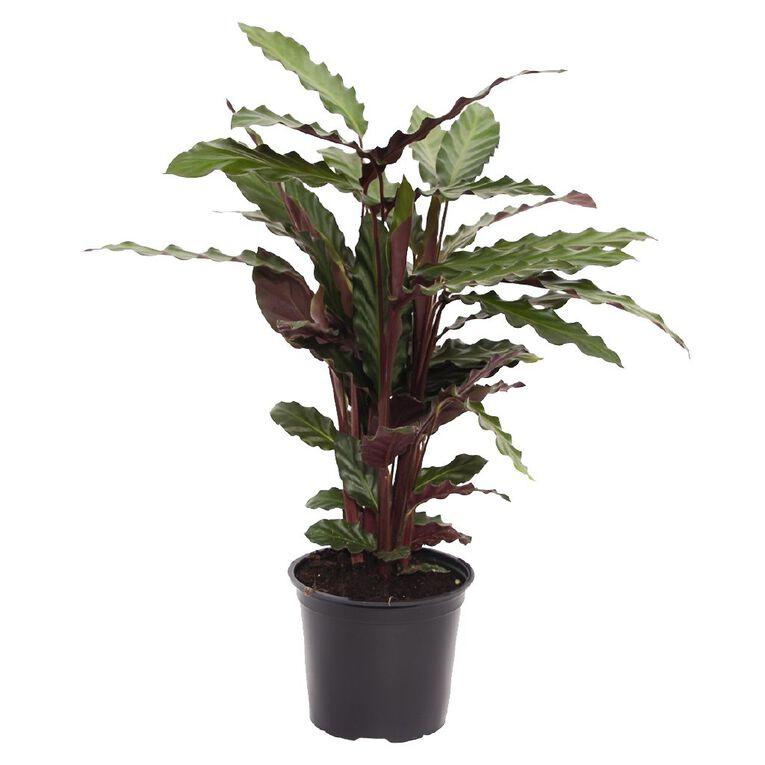 Foliage Mix 15cm  Pot, , hi-res