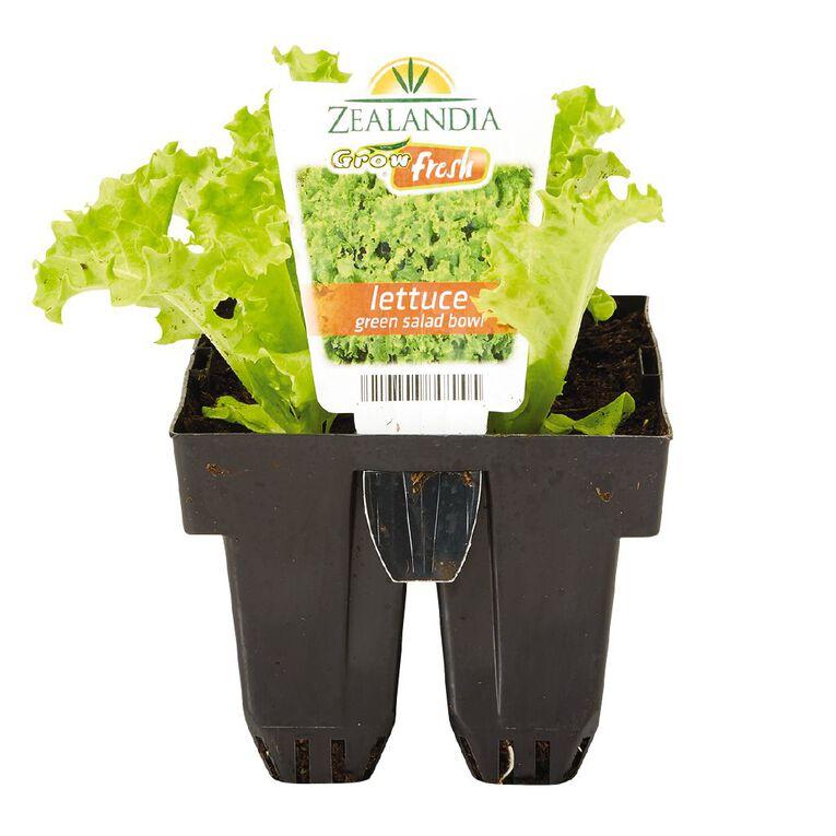 Growfresh Lettuce Green Salad Bowl, , hi-res