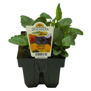 Growflora Pansy Delta Mix