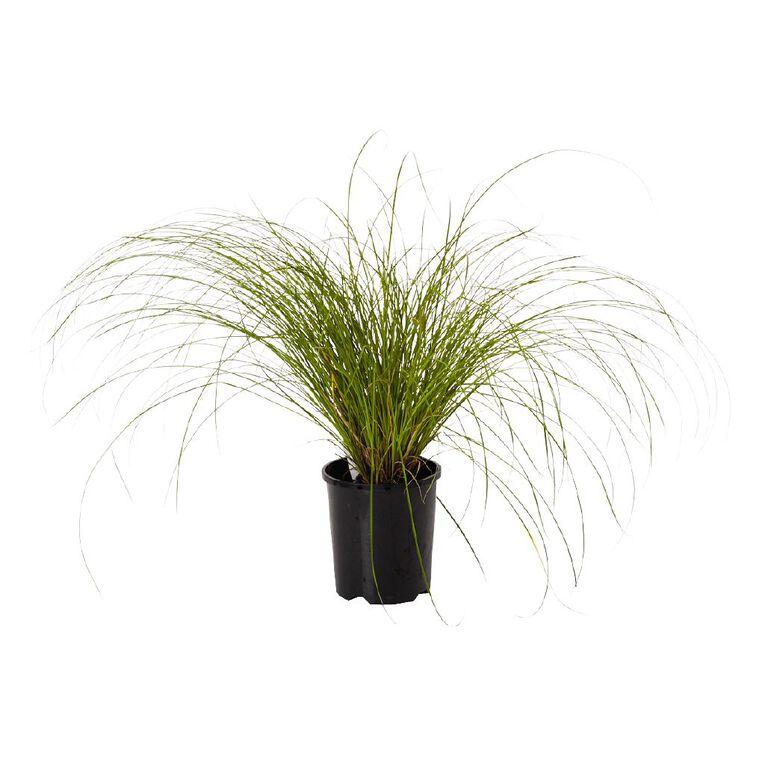 Carex Testacea 1.5L Pot, , hi-res
