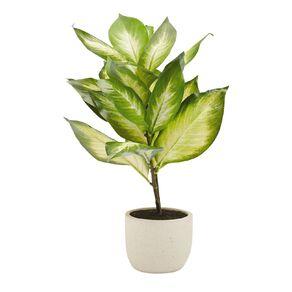 Living & Co Artificial Dieffenbachia Potted Plant Ivory 58cm