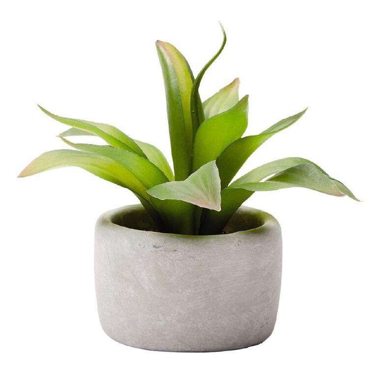 Living & Co Agave Succulent in Concrete Pot 22.8X22.8X20.3CM Grey, , hi-res