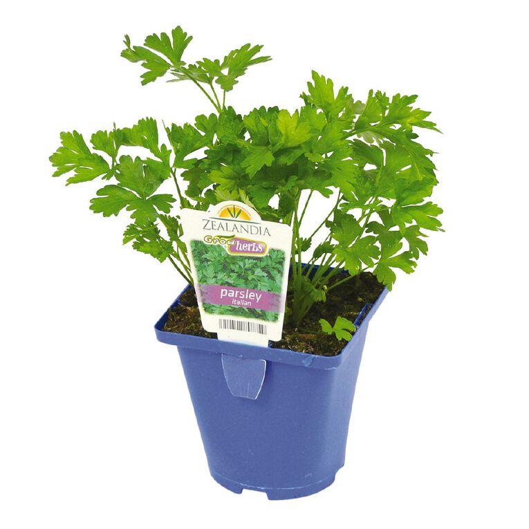 Growherbs Parsley Italian, , hi-res