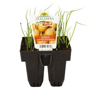 Growfresh Onion Pukekohe Long Keeper