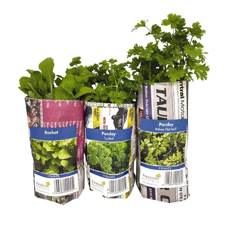 Herbs Assorted 10CM, , hi-res