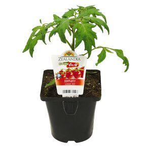Growfresh Single Tomato Sweet 100 10cm Pot