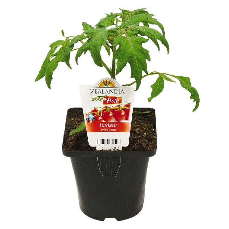Growfresh Single Tomato Sweet 100 10cm Pot, , hi-res