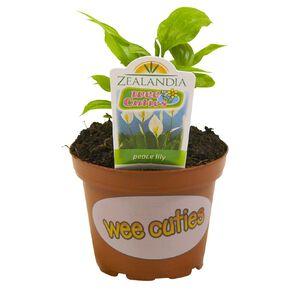 Indoor Wee Cuties Baby Houseplant 8cm Pot