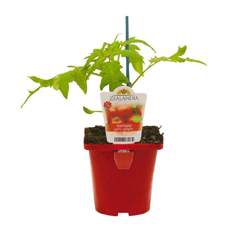 Dad's Delight Tomato 10cm Pot, , hi-res