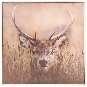Living & Co Stag Framed Canvas 60 x 60 x 3.5cm