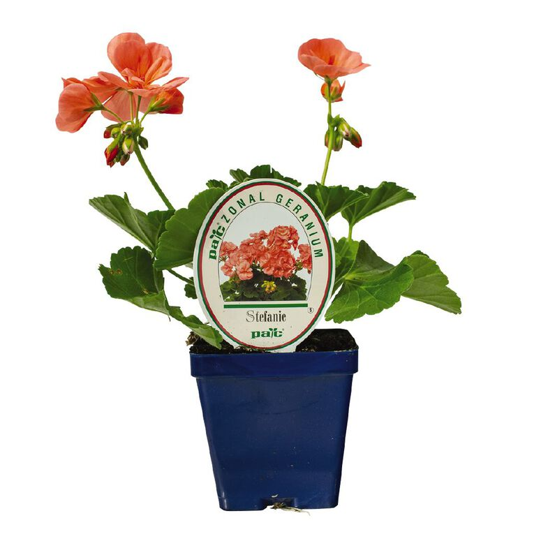 Geranium Pac 9cm Pot, , hi-res