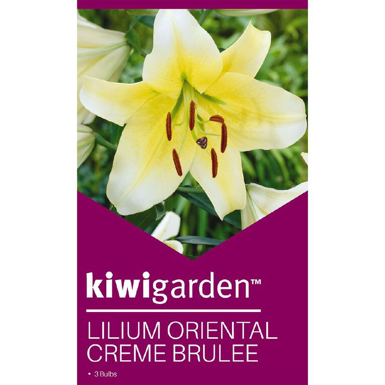 Kiwi Garden Oriental Lilium Creme Brulee 3PK, , hi-res