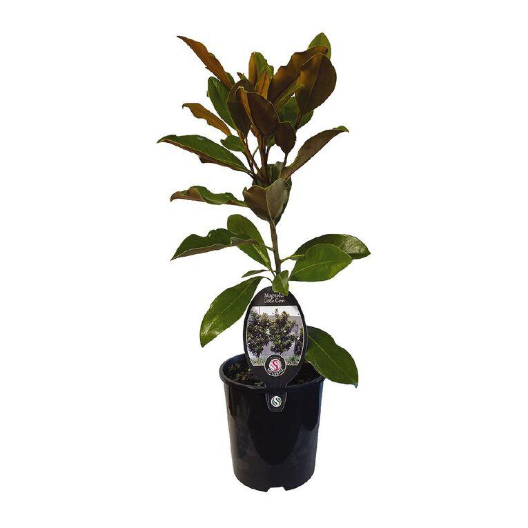 Magnolia Little Gem 1.9L, , hi-res