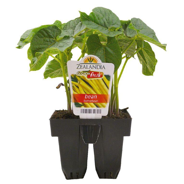 Growfresh Bean Butterbean, , hi-res
