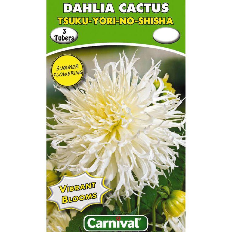 Kiwi Garden Dahlia Bulb Single Variety 3 Pack, , hi-res