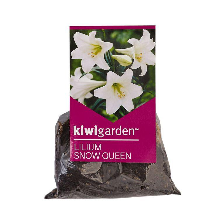 Kiwi Garden Christmas Flowering Lilium Bulb Snow Queen 5PK, , hi-res
