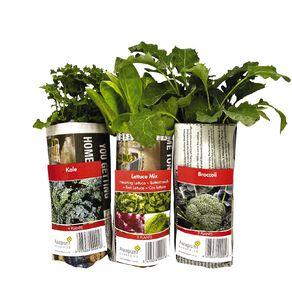 Vegetable Plants 10CM