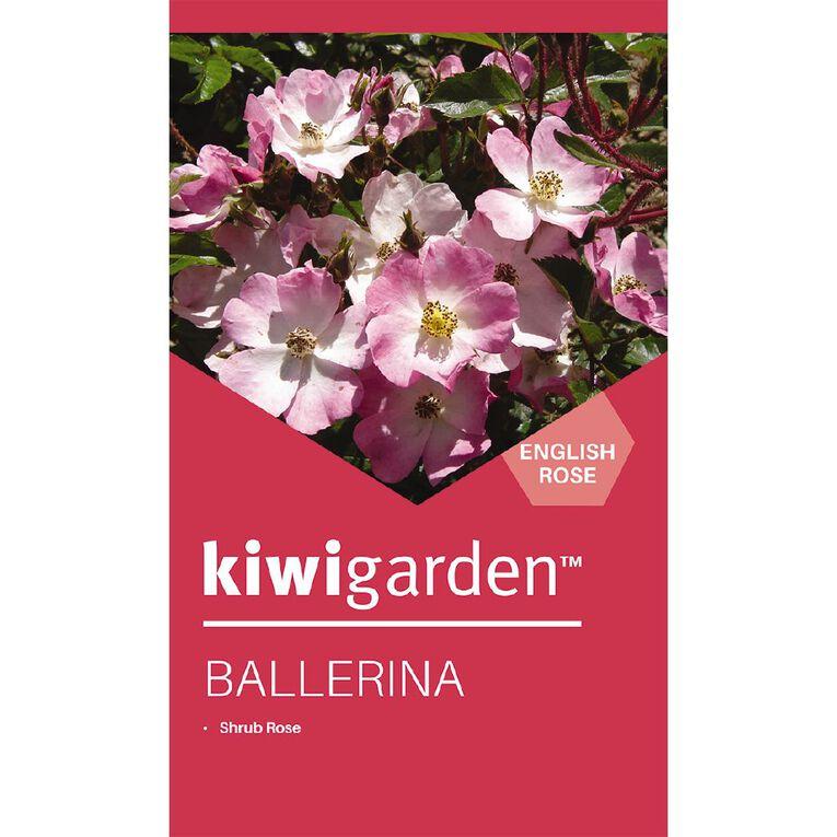 Kiwi Garden Old English Rose Bareroot, , hi-res