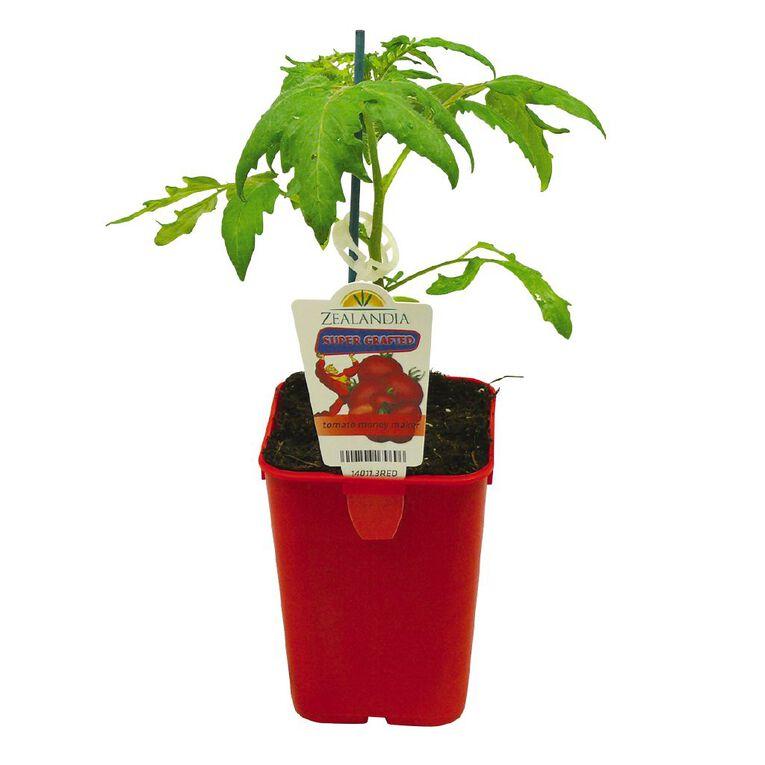 Supergrafted Tomato Money Maker 1.3L Pot, , hi-res