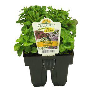 Growflora Lobelia Upright Mix