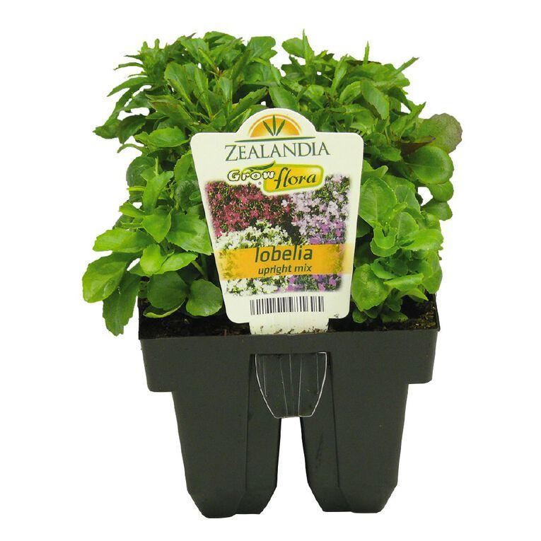 Growflora Lobelia Upright Mix, , hi-res