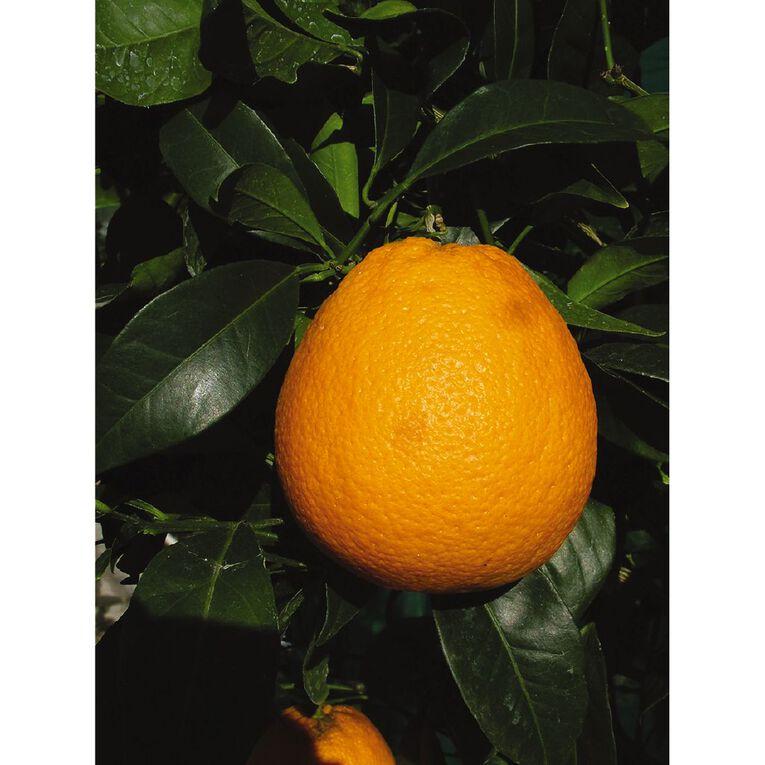 Citrus Orange 4.7L Pot, , hi-res