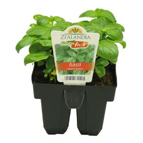 Growfresh Basil