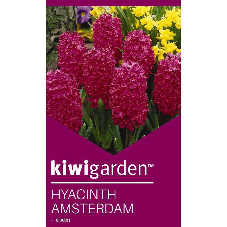 Kiwi Garden Hyacinth Amsterdam 5PK, , hi-res