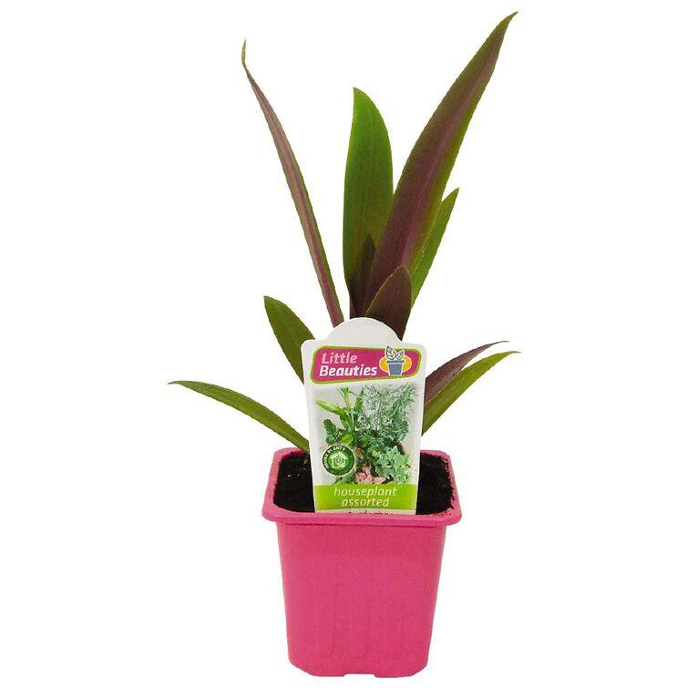 Indoor Little Beauties 7cm Pot, , hi-res