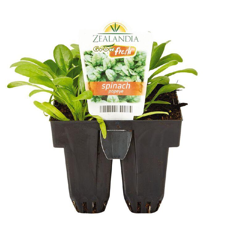 Growfresh Spinach Popeye, , hi-res