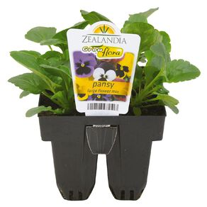 Growflora Pansy Large Flower Mix