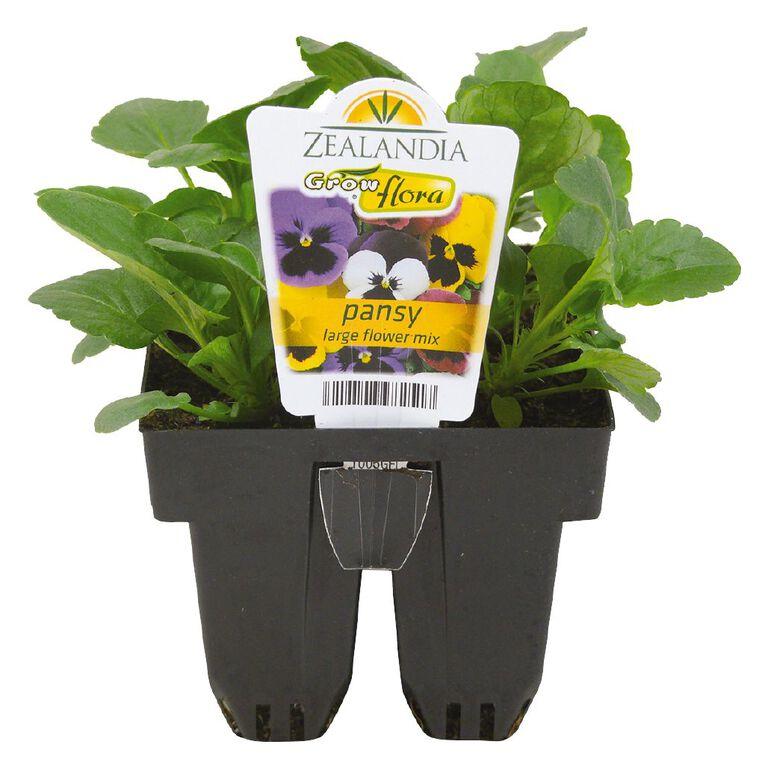 Growflora Pansy Large Flower Mix, , hi-res
