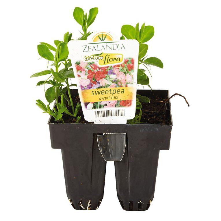 Growflora Sweet Pea Dwarf Mix, , hi-res