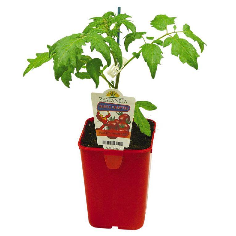 Supergrafted Tomato Sweet 100 1.3L Pot, , hi-res
