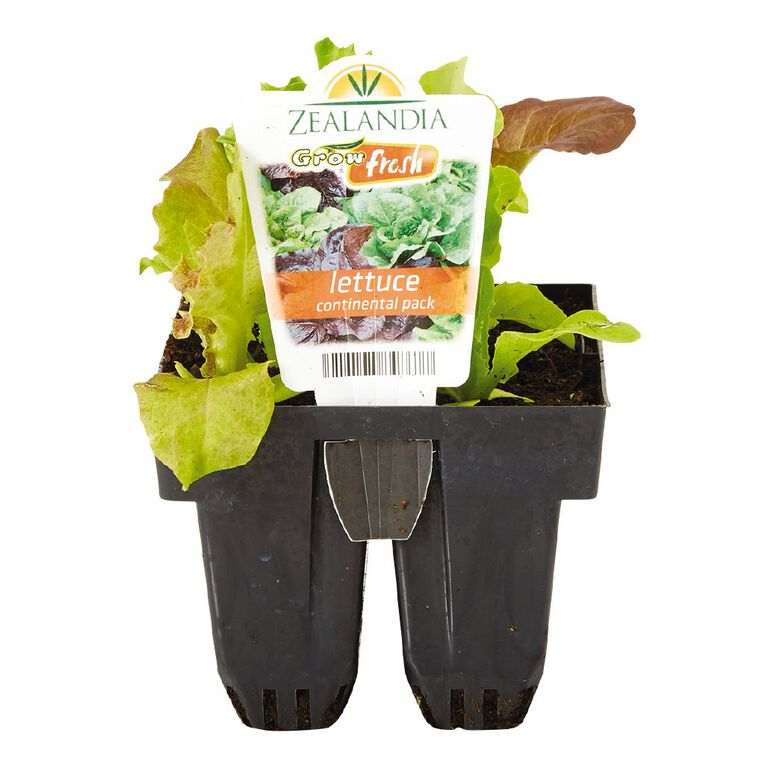 Growfresh Lettuce Continental, , hi-res