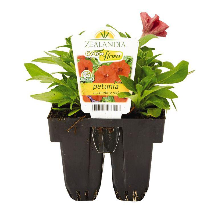 Growflora Petunia Ascending Red, , hi-res