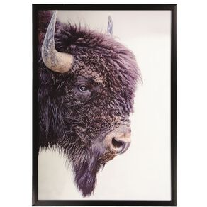Living & Co Buffalo Framed Print 50 x 70 x 2.3cm