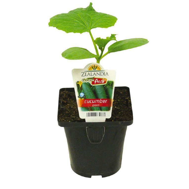 Growfresh Single Cucumber Green 10cm Pot, , hi-res