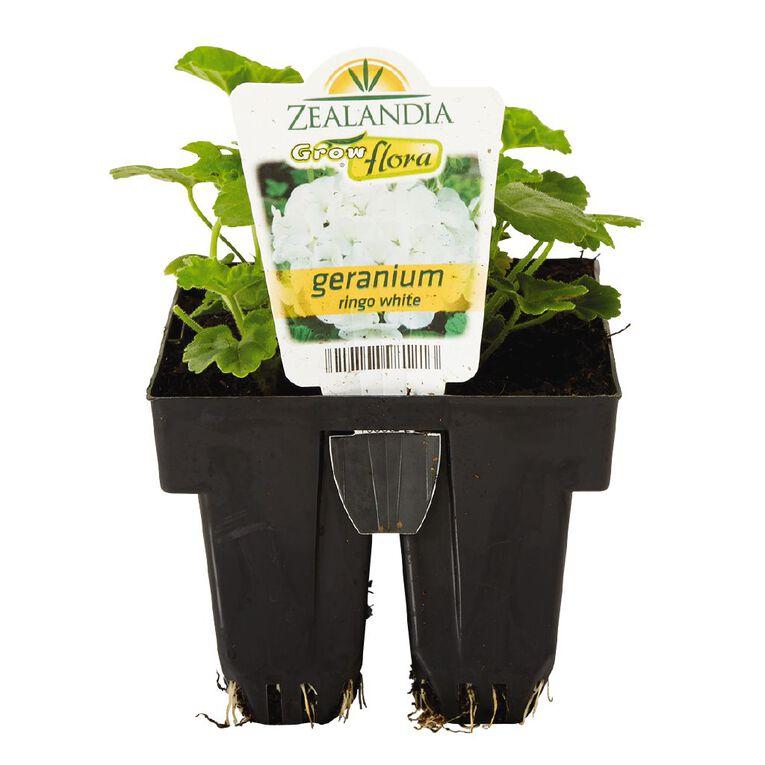 Growflora Geranium Ringo White, , hi-res