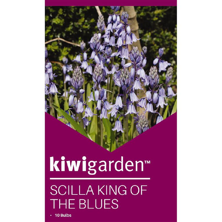 Kiwi Garden Scilla King of the Blues 10PK, , hi-res