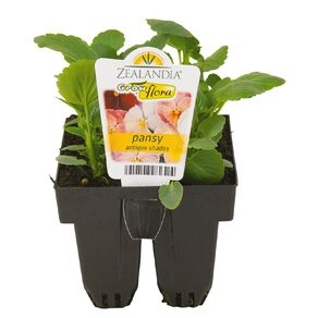 Growflora Pansy Antique Shades