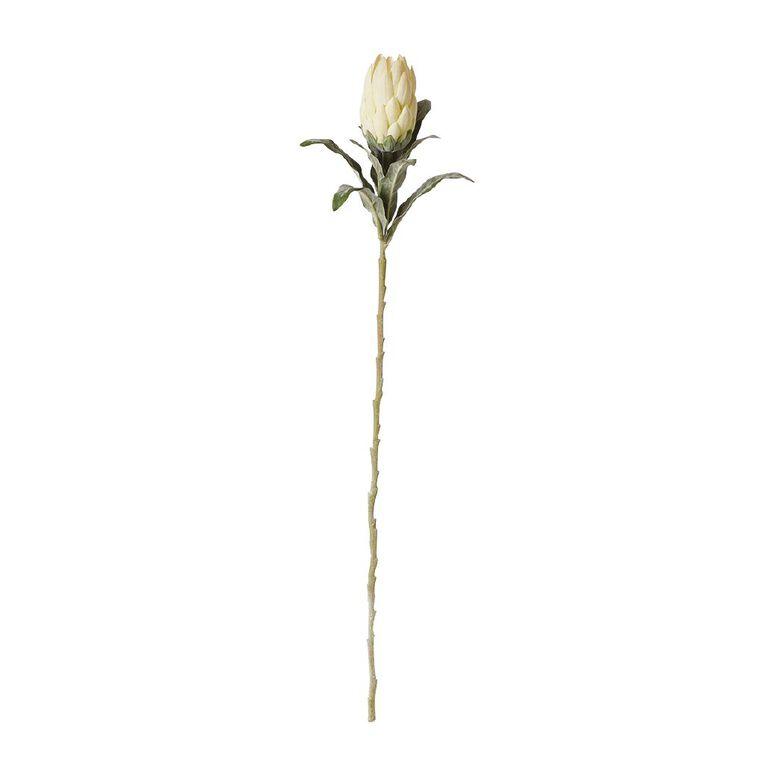 Living & Co Artificial Protea Compacta Ivory 65cm, , hi-res