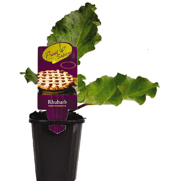 Fruit Sation Rhubarb Next Generation 9cm Pot, , hi-res