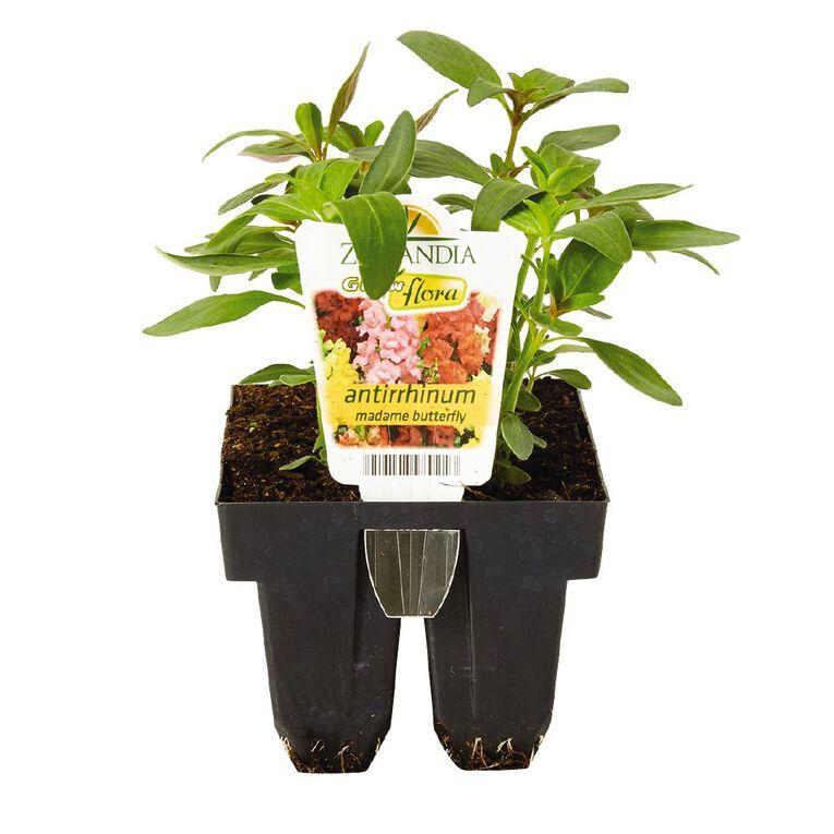 Growflora Antirrhinum Madam Butterfly, , hi-res