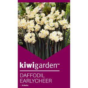 Kiwi Garden Daffodil Earlycheer 25PK
