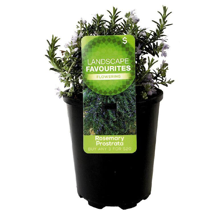 Landscape Favourites Assorted 1L Pot, , hi-res