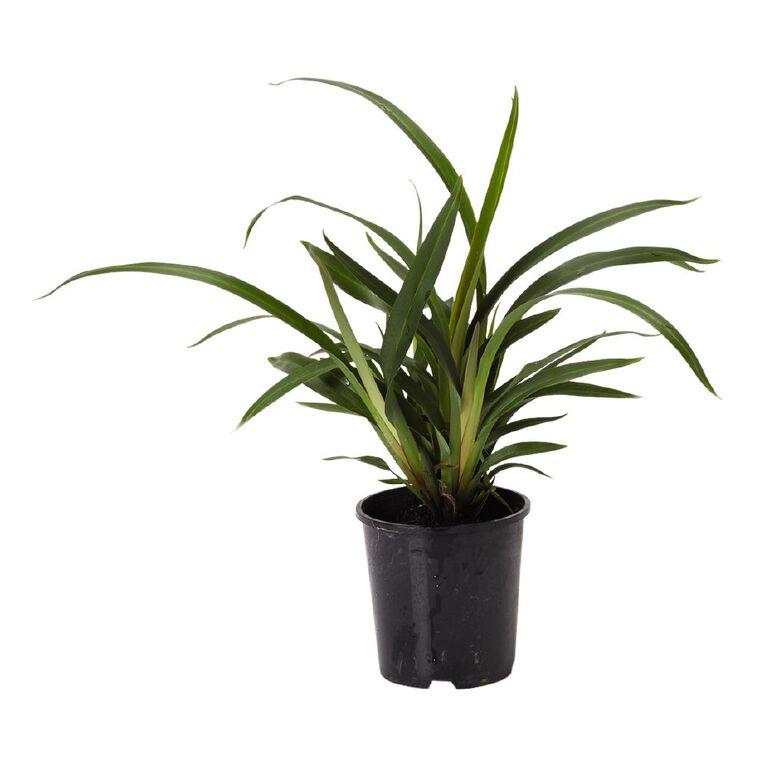 Dianella Tasred 1.9L Pot, , hi-res