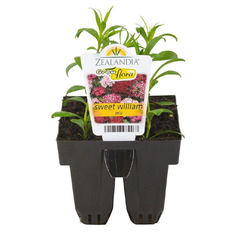 Growflora Sweet William, , hi-res