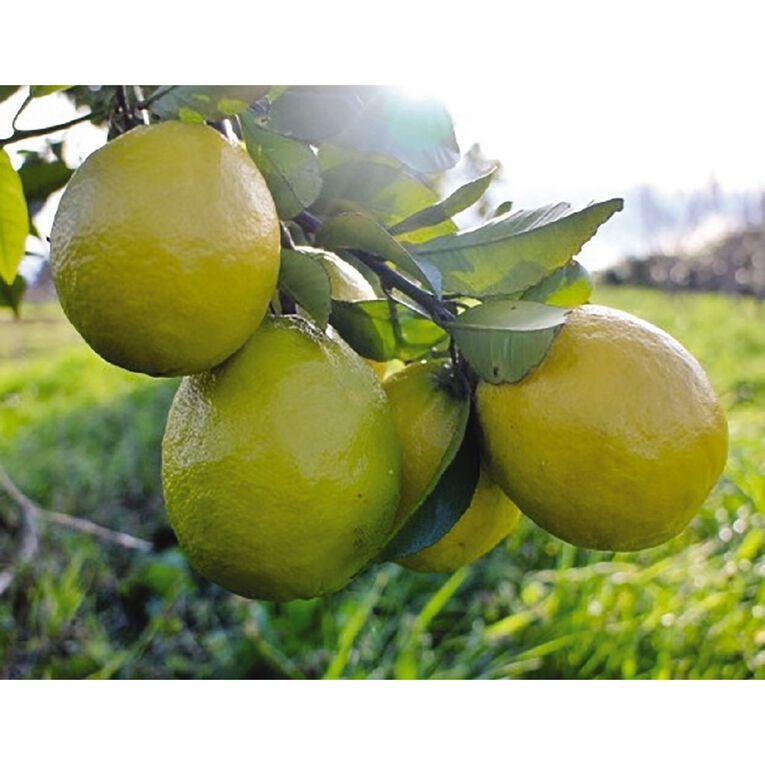 Citrus Lemonade 4.7L Pot, , hi-res